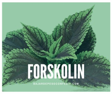 forskolin-farmacia
