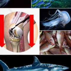 Para que sirve el colágeno IMPORTANTISIMA proteína! Esencial Desde los 40 años para la piel y articulaciones