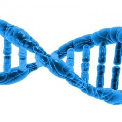 GRP78 protein para adelgazar.